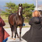 募集馬展示会について