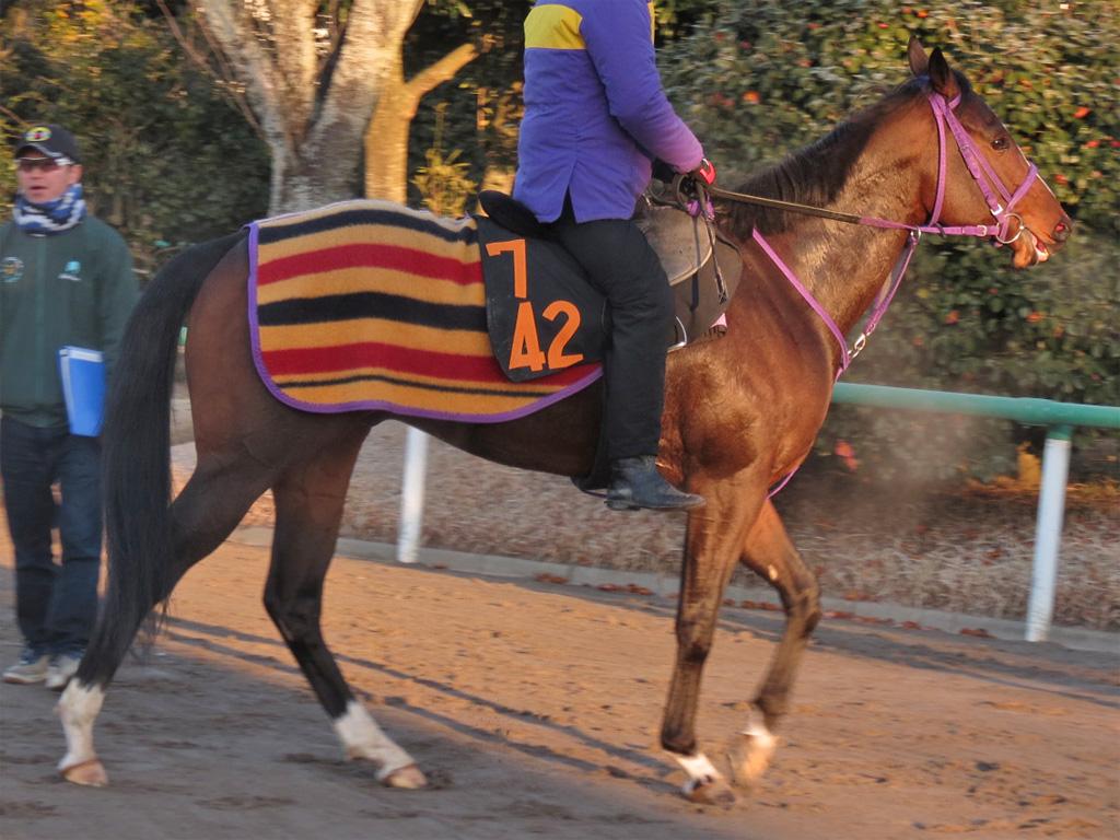 デストリーライズ-前走2着馬が次戦も2着にきているように、力は足りておかしくない。