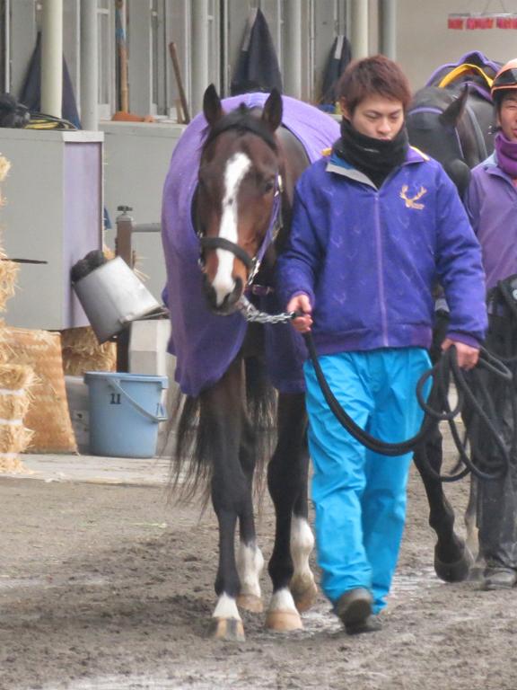 デストリーライズ-ゼロ革命ネクスト募集馬の兄。ここで勝ってひと息入れ、春の東京開催にむかう形が理想的。
