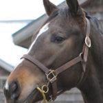 グレイスフルソング'13の馬名候補を一挙公開
