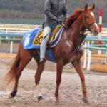 地方競馬指定交流競走登録状況の調べ方