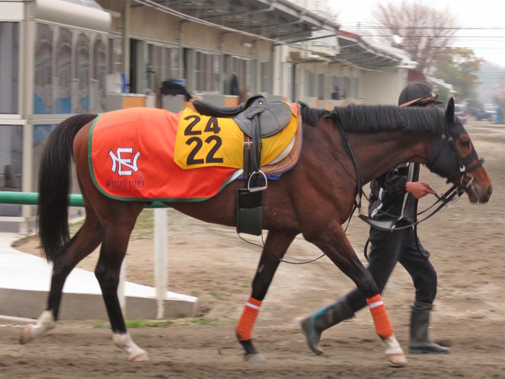 エタンダール-今週の追い切りも終いでグーンと伸びる形。馬なりでムチも入れずにこの動きですから、前走をステップにいい状態で臨めそうですよ。(中館師)