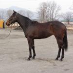 スイートマカロン'13 の馬名候補を申請いたしました。