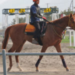 リンデンルレーブ'13、馬名は「アカラ」