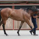 【新規向け】無料馬「ハイアーラヴ'13」通常受付申込開始!