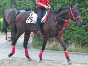 エルカミーノレアル「当日は気分よく走らせてあげること、本馬の場合はそれに尽きますよね。」(小崎憲調教師)