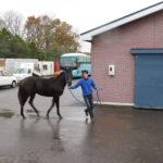 募集馬展示会レポート【2頭目】エミオンステーブル:ステラリード'14 牝(父:シンボリクリスエス)