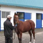 募集馬展示会レポート【6頭目】ミスペンバリー'14 牝(父:ディープインパクト)