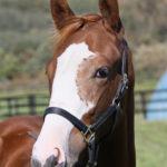 2016年度の広尾っ仔レース見解と推奨馬メールについて