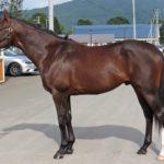 ディープインパクト産駒牡馬ミスペンバリー'13(マグナムインパクト)、残4口。今週末で満口か。