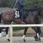 未勝利戦に出走する初出走馬ドゥオーモ