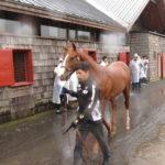 北海道募集馬展示会スイートマカロン'15コメント
