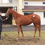 北海道募集馬展示会レフィナーダ'15コメント