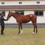 北海道募集馬展示会ステラリード'15コメント