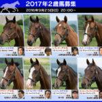 2017年2歳募集馬の人気ランキング