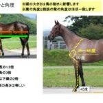 JRA主催「実践競走馬学」レポート【生産・血統・馬体編】