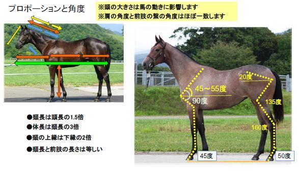 20161019馬体の見方