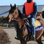 ファンタスト木村牧場を中心に2015年産募集馬4頭の動画を更新!