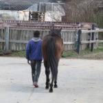 どの馬でしょうか?