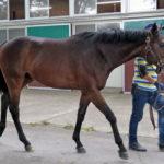 二ノ宮厩舎の佐々木助手がアドバンスマルスに騎乗。7月初旬頃のトレセン入厩へ。