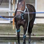 尾関知人調教師のブログ「NO HORSE, NO LIFE !」でのゼロカラノキセキコメント
