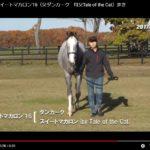 2018年2歳募集馬の動画が更新されました。