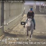 本日は募集馬の調教動画更新日!