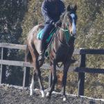 2016年産馬応募馬名/ステラリード' 16