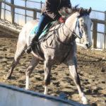 2016年産馬応募馬名/スイートマカロン' 16