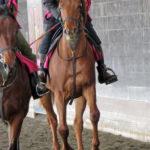 2016年産馬応募馬名/ウェルシュステラ'16