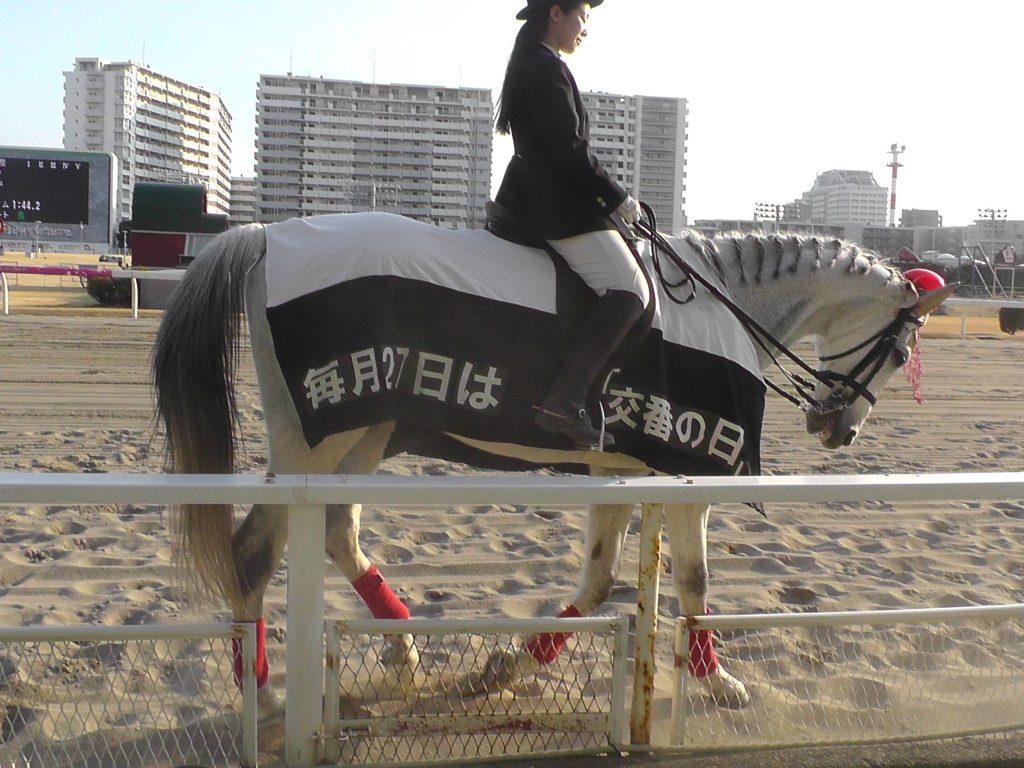 川崎誘導馬2