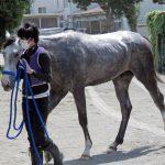 ダンカーク産駒がJRA認定フレッシュチャレンジ2歳新馬で圧勝!