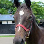 スマイリンアスク'17のShall Farm(現ASK STUD)生産馬ファンタジストが小倉2歳Sを圧勝!