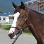 香港国際競走で日本馬が快挙!