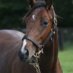 馬名応募のルール