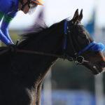 先週末の中央競馬勝ち馬
